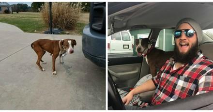 Il parcourt plus de 2000 km pour aider un chien perdu, mais n'avait pas prévu la suite