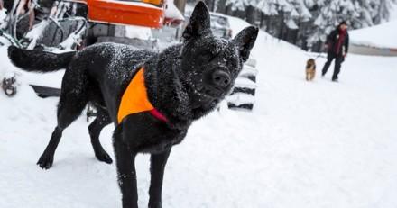Un chien de CRS retrouve une randonneuse perdue en montagne dans les Hautes-Pyrénées