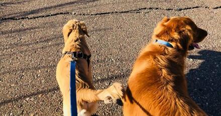 En promenade avec son chien, elle voit un serpent et reste sans voix face à la réaction de son toutou