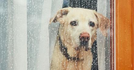 Combien de temps mon chien peut-il rester seul ?