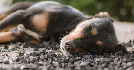 Elle trouve son chiot effondré sur le sol, ce que lui révèle le vétérinaire la plonge dans l'horreur