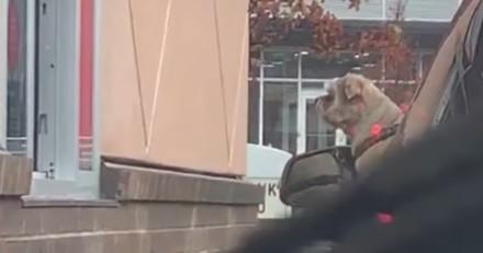 Drive de Starbucks : la fenêtre de la voiture devant elle s'ouvre et elle est ébahie par ce qu'elle voit