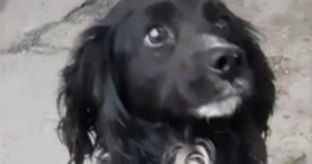 Ce chien se venge de la famille qui l'a abandonné dans une station-service (Vidéo)