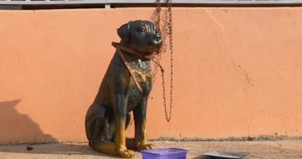 Il est accusé d'avoir maltraité son chien, ce que découvre la police fait exploser de rire tout le monde