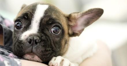 5 situations stressantes pour chien et chat : comment l'aider à gérer ce moment difficile ?