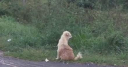 Ce chien attend ses maîtres en Thaïlande sur la même route pendant 4 ans : un petit détail va tout changer