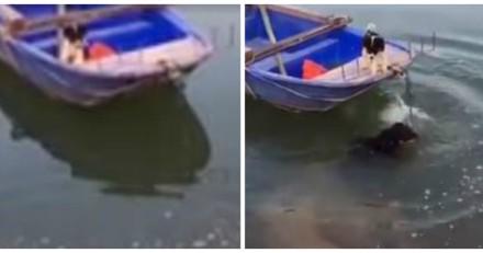 Il entend de petits cris venant d'un bateau : son chien saute à l'eau et fait l'impensable (Vidéo)