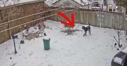 Elle surveille son chien dans le jardin, quand tout à coup c'est le choc (Vidéo)