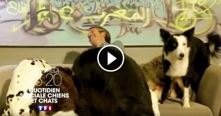 Chiens et chats à l'honneur ce soir sur TF1 dans Quotidien de Yann Barthès !