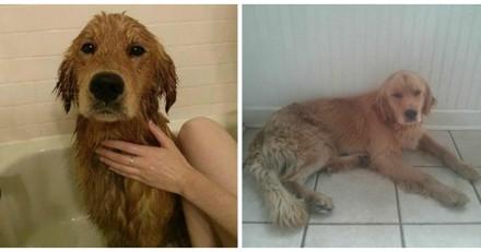 Il sauve un chien des inondations, 3 jours après il est choqué en le regardant de plus près