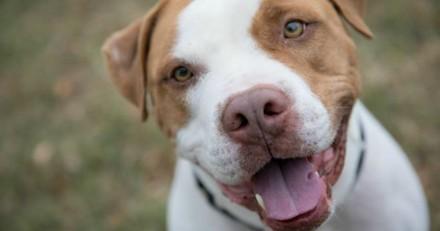 Après 5 ans d'amour, il rapporte son chien au refuge et fait une annonce qui laisse tout le monde bouche bée