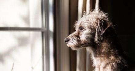 Covid-19 : Comment aider son chien à bien vivre le déconfinement ?