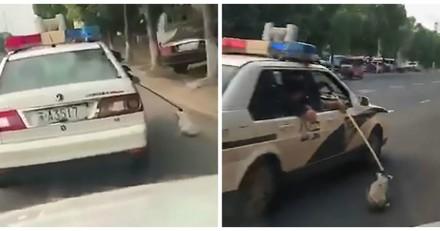 Filmés en train de trainer un chien derrière leur voiture, les policiers donnent une explication révoltante
