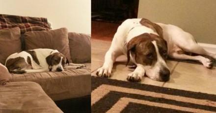 Elle reçoit un colis mystérieux pour son chien, la réaction du toutou est bouleversante (Vidéo)