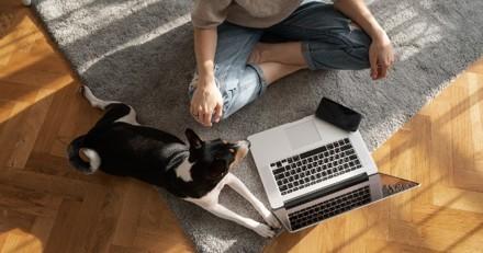 Fin du télétravail : 3 conseils pour bien préparer son chien ou son chat à se retrouver seul