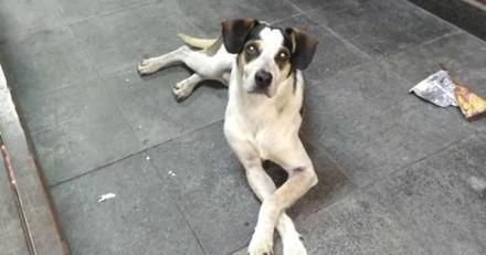 Scandale : un chien tué par un employé de Carrefour au Brésil