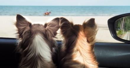 Moins d'abandons d'animaux de compagnie cet été ? Les Français prévoient de partir avec eux en vacances !