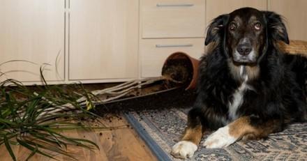 Le chien a-t-il l'esprit de vengeance ?