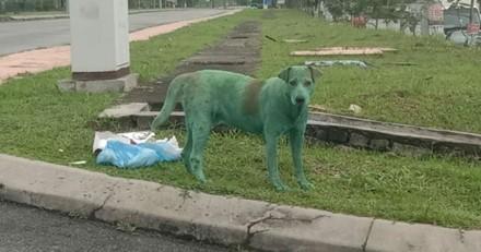 Chien vert sur le bord de la route : à mesure qu'ils se rapprochent, ils comprennent ce qui se passe !