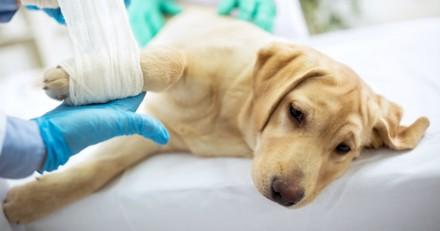 Un vétérinaire révèle ce qui se passe avant chaque euthanasie, il fait pleurer le monde entier