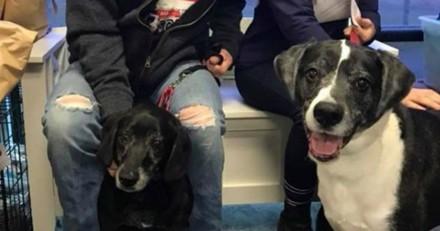 Il entre chez le vétérinaire avec ses 2 chiens : les mots qu'il prononce laissent tout le monde sans voix
