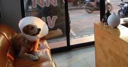 Ils voient un chien devant une clinique vétérinaire, quand ils s'approchent ils n'en reviennent pas