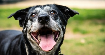 Voilà le secret des chiens qui vivent plus de 17 ans !