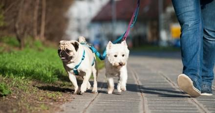 5 astuces pour donner une plus belle vie à votre chien citadin