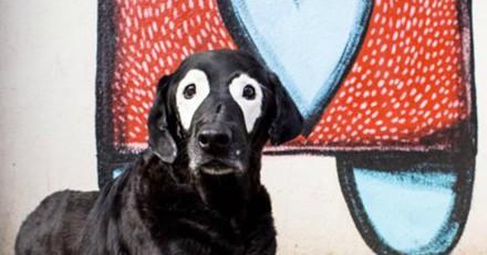 Rowdy, le chien au grand coeur atteint de vitiligo est décédé