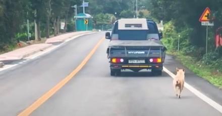 La chienne court derrière la voiture, paniquée : un drame se joue à l'intérieur