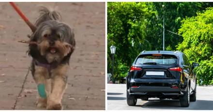Ils se font voler leur voiture avec leur chien à l'intérieur, 3 jours après ils reçoivent un coup de fil capital