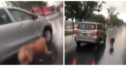 Il promène son chien en le trainant depuis sa voiture, mais n'avait pas prévu un petit détail (Vidéo)