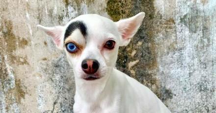 Elle adopte un chien au look absolument unique et reçoit des messages choquants
