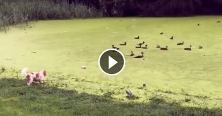 Persuadé de cavaler sur l'herbe, ce chien n'a pas compris ce qui lui est arrivé ! (Vidéo du jour)