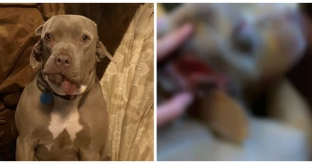 Les volontaires du refuge accueillent un chien et réalisent avec horreur qu'il a 2 bouches (Vidéo)
