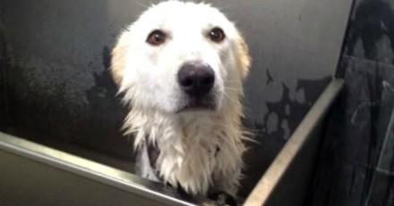 Elle s'occupe pendant des mois d'un chien abandonné, mais n'était pas prête pour ce qu'elle allait découvrir