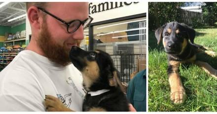 Il veut adopter un chien, sa mère pose une condition et son histoire fait le tour du web