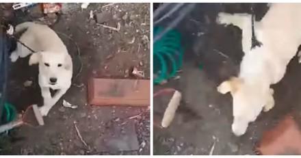 Il filme un chien attaché sous la pluie en train de pleurer. La réaction du maître est inadmissible (Vidéo)