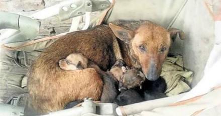 Cette chienne errante a sauvé la vie d'un nouveau-né qui allait mourir de froid