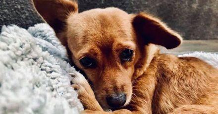 Une chienne protège son maître malade : quand il sort de l'hôpital, il a une réaction terrible