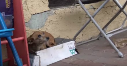 Cette chienne vivait dans une boite à chaussures, ses sauveurs comprennent pourquoi en venant l'aider