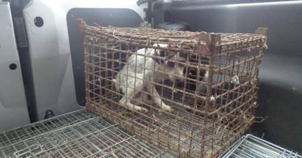 Ils trouvent une chienne enfermée dans une cage sale, en s'approchant ils voient un détail qui change tout