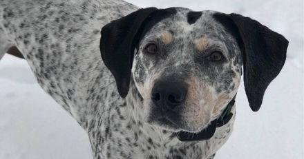 Paniquée, elle cherche son chien partout : elle entend un bruit et comprend tout !