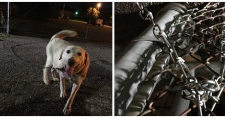 Il découvre un chien attaché devant son refuge, après une radio il a une énorme surprise