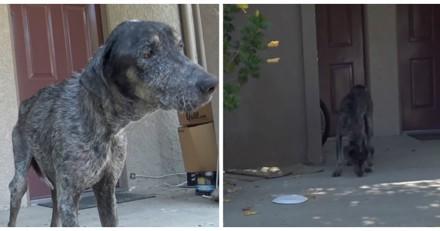 Ils sauvent une chienne, contactent ses propriétaires et n'en reviennent pas de leur réponse