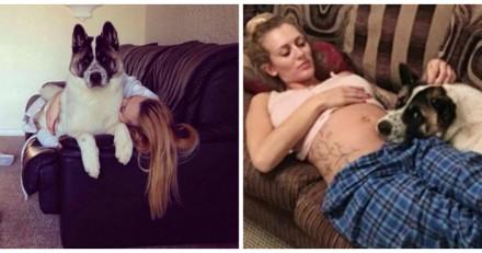 Sa chienne gémit face à son ventre de femme enceinte, le médecin lui annonce une terrible nouvelle