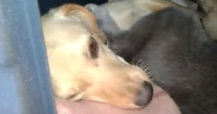 Il fabrique un abri pour une chienne errante, le lendemain il n'en revient pas de ce qu'il trouve (Vidéo)
