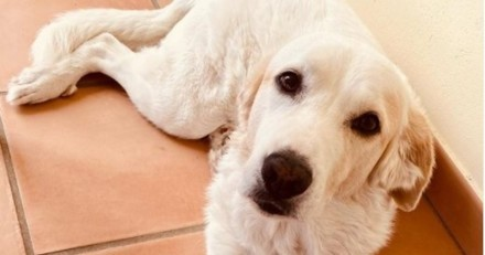 Jean-Luc Reichmann poste une photo de son Labrador amputé et délivre un message fort