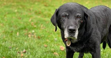 Julien Courbet en deuil : il partage un message émouvant suite à la mort de sa chienne