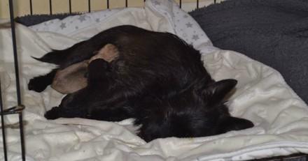 Une chienne est abandonnée devant une maison avec son chiot, quand le vétérinaire fait une radio : c'est le choc